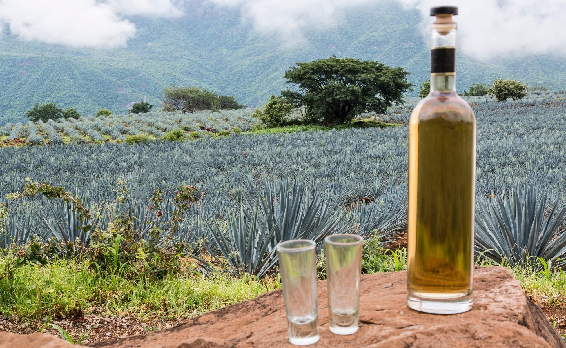 envasado de botella de tequila