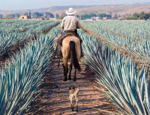 14 consejos para viajar a Tequila, Jalisco