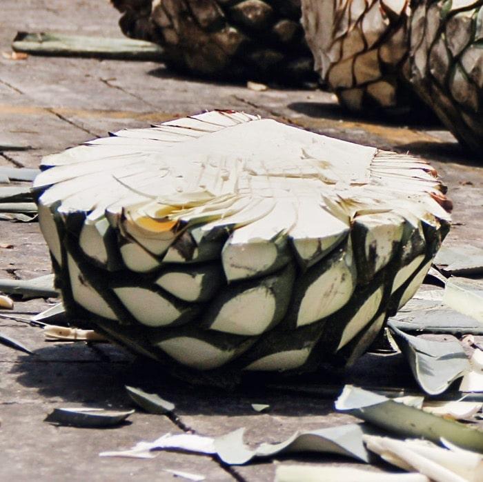 Corazon de agave