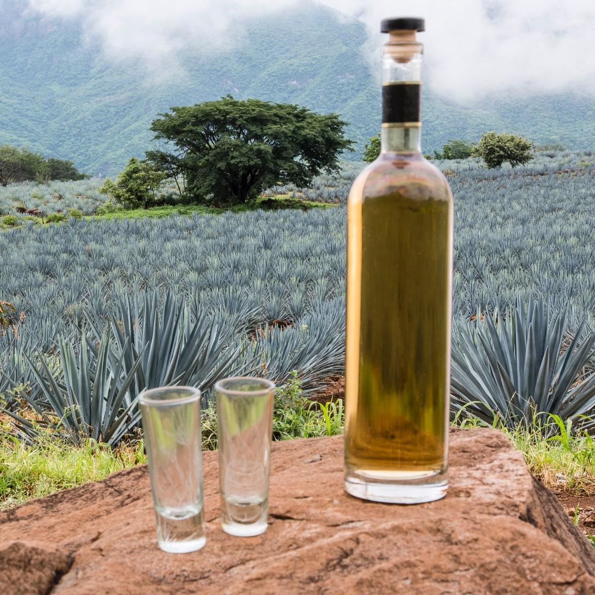 elegir tequila