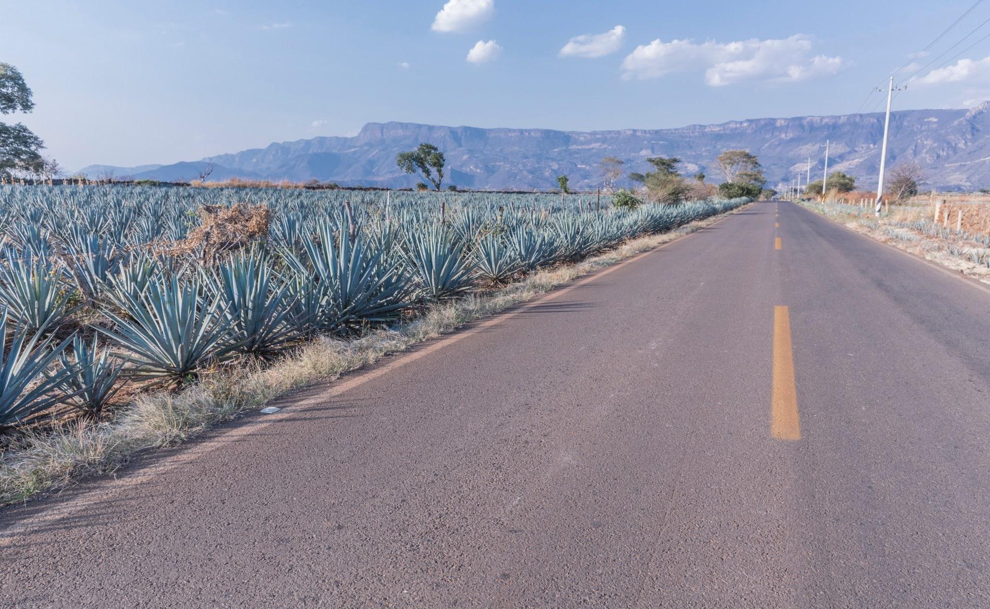 la ruta de tequila en coche