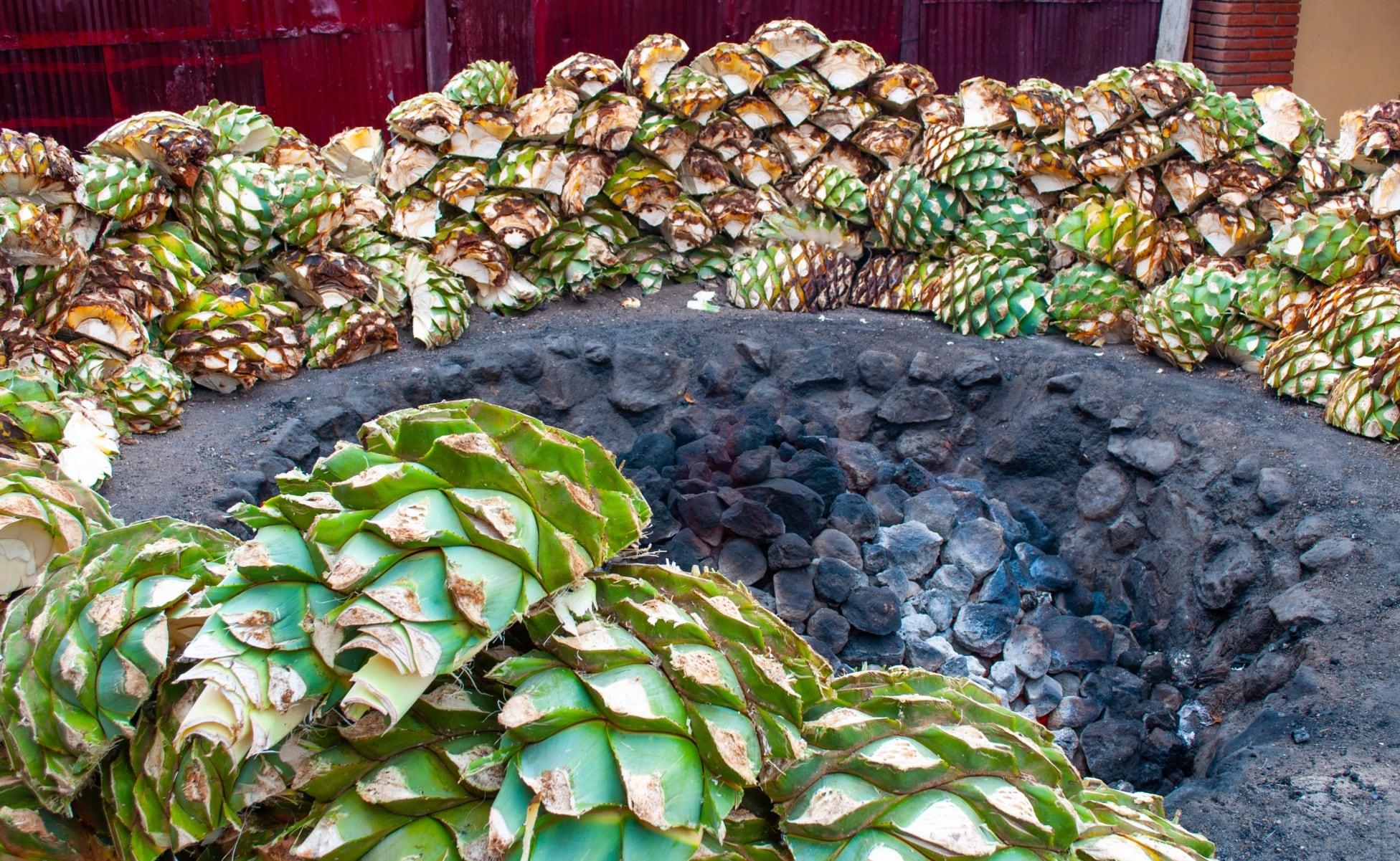 horno de agave