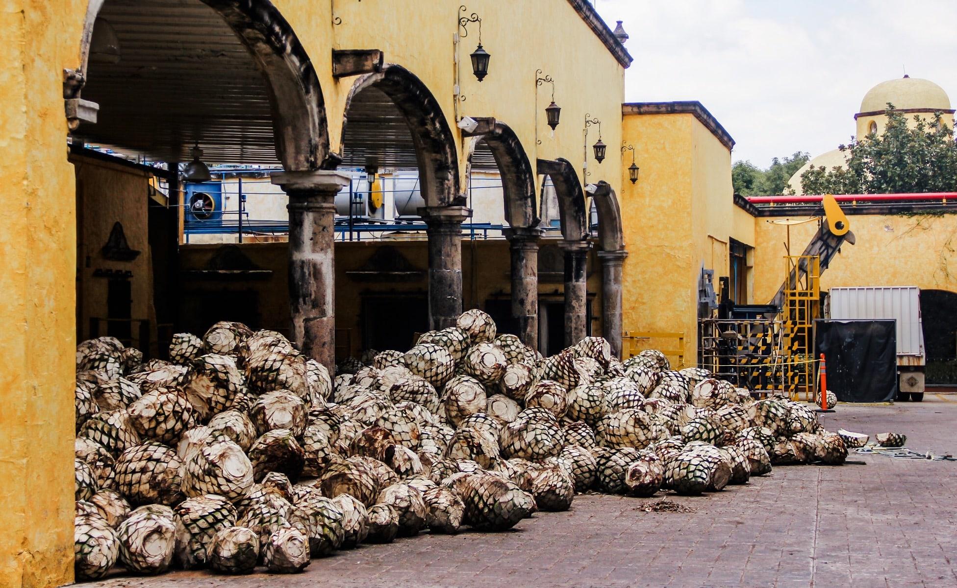 pueblo tequila jalisco