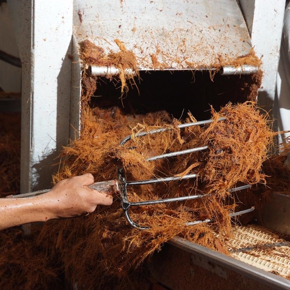 extraccion jugos agave
