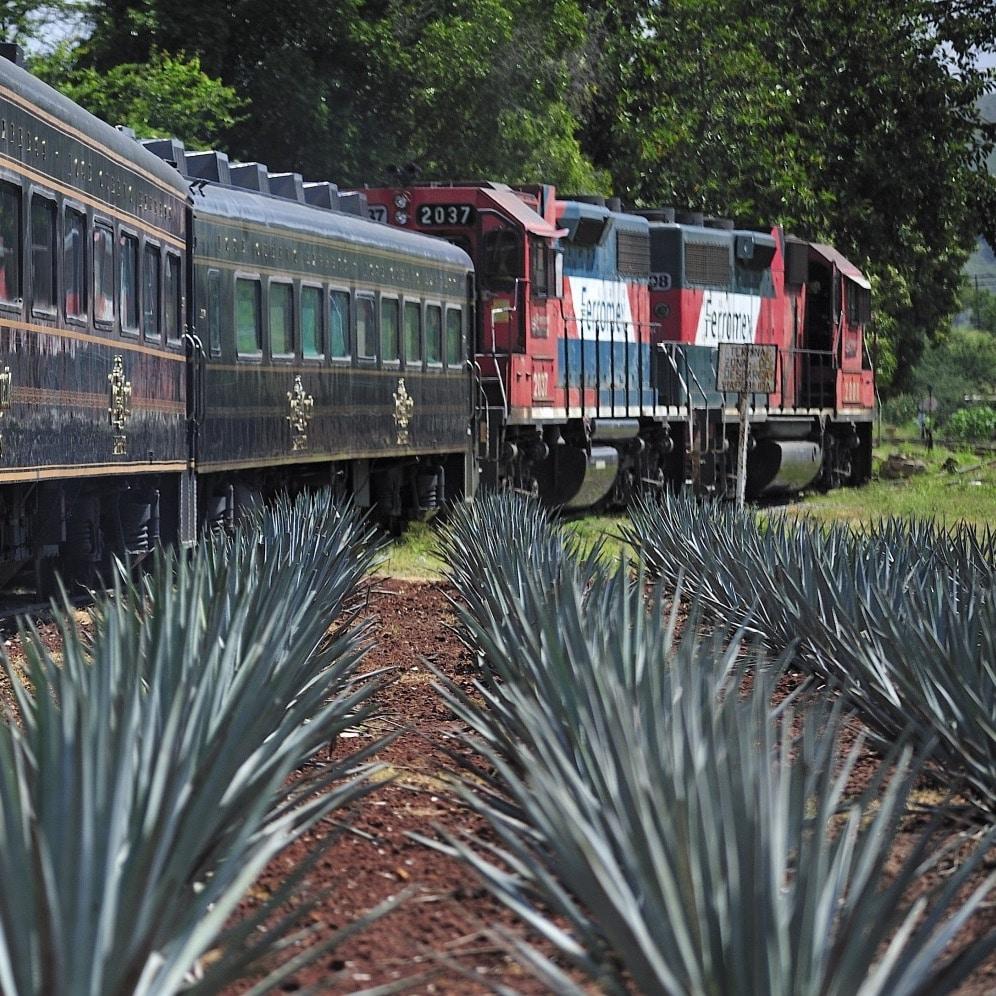 viaje tren tequila